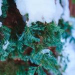 Garten im Winter – Was zu tun ist