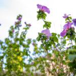 So wird Ihr Garten fit für den Frühling!