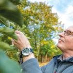 Tipps zum Obstbaumschnitt