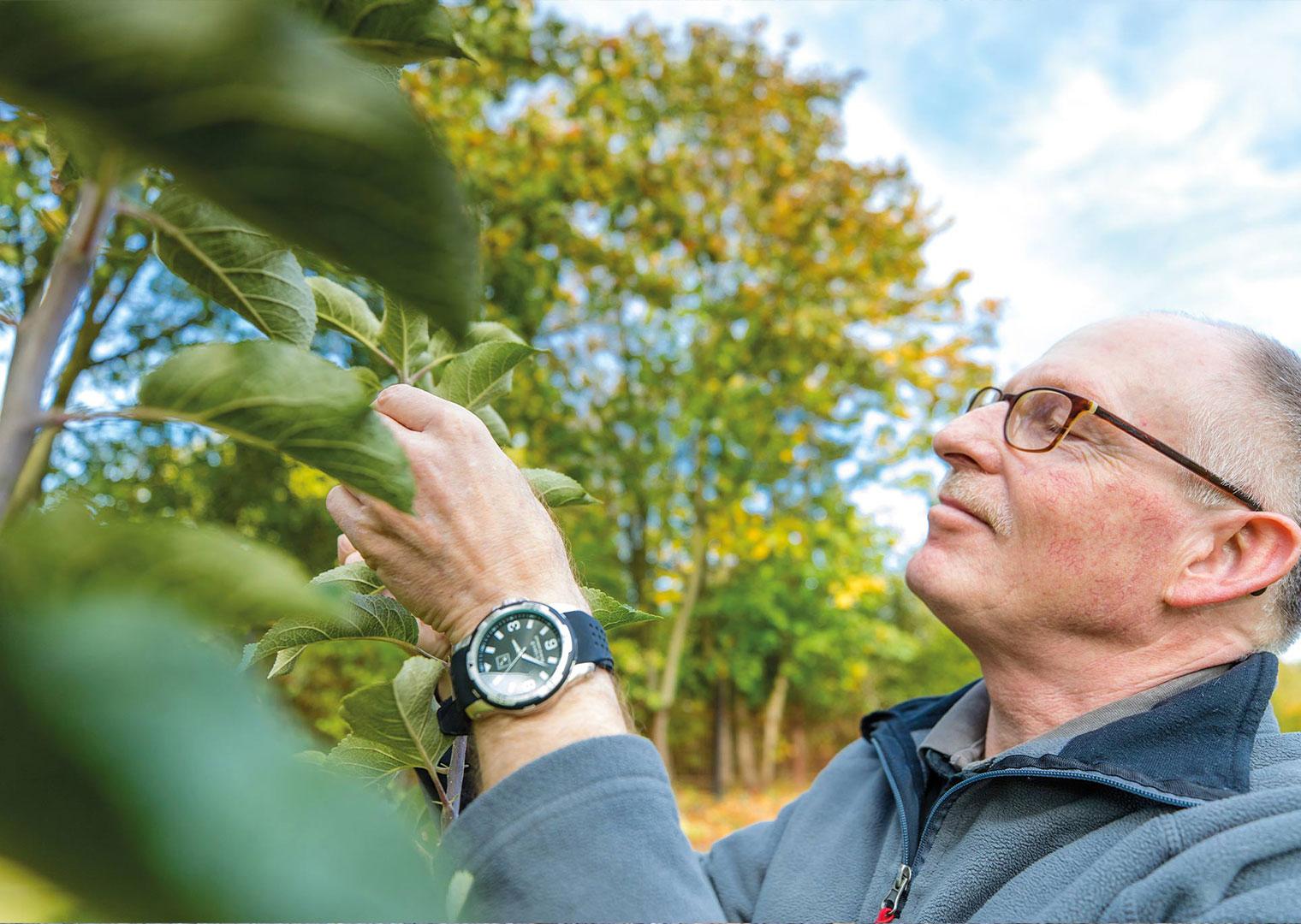 Obstbaumschnitt, Baumpflege