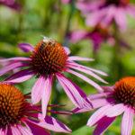 So gestalten Sie Ihren Garten insektenfreundlich!
