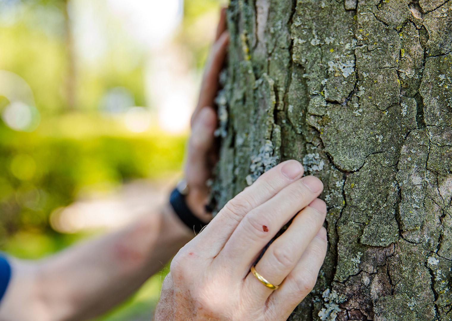 Bäume fällen